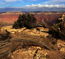 Grand Canyon Vista No. 9 by Benjamin Padgett