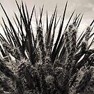 Yucca & Cactus No. 1 by Benjamin Padgett
