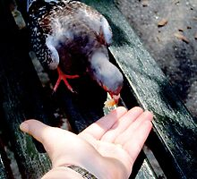 A Bird in the Hand by Lee Kerr
