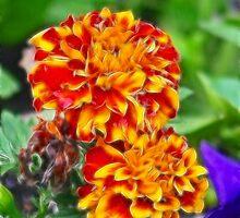 Fractalius Marigolds by mlynnd