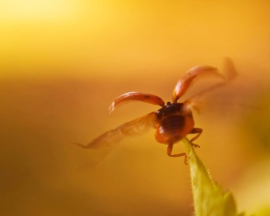 Fly into the sunset by Gaby Swanson  Photography