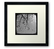 Blossoms in Black & White - Through The Viewfinder Framed Print