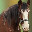 Clydesdale by Cazzie Cathcart