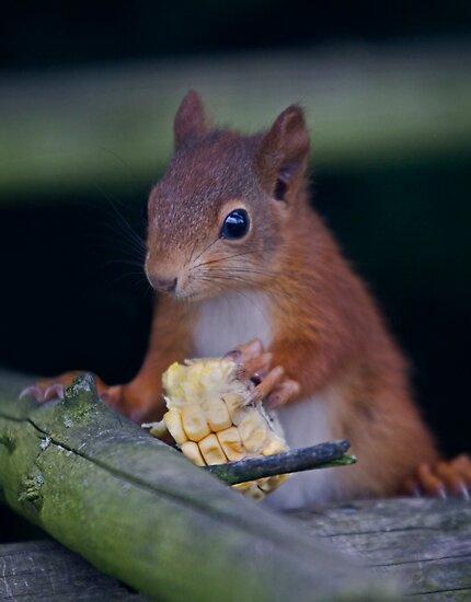 Squirrel Banquet by Krys Bailey