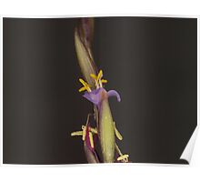 Flower on a Bromeliad Airplant #2 Poster