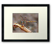 Dragon Fly - Colour Framed Print