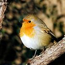 Robin by Linda More