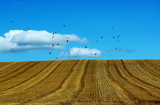 Hay field Flyers by nazboo