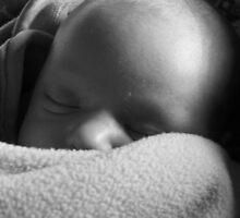 Jaybird sleeping by Lori  Wilson