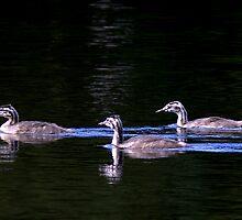 Great Crested Grebe Family by Neil Bygrave (NATURELENS)