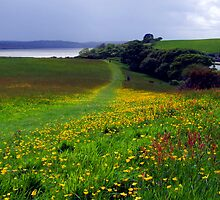 Buttercup Fields by Wayne Holman
