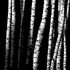 Birch Abstract by svetlananilova