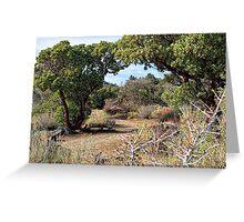Desert Garden Trail Greeting Card