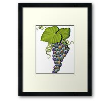 EYEBALL GRAPES  Framed Print