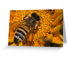 Joker Bee Greeting Card