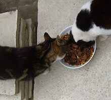 Tiggy Winks and Chrissie having a nibble, yummy! by ducatirose