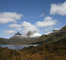 Cradle Mountain through button-grass, Central Highlands, Tasmania by Christine Beswick
