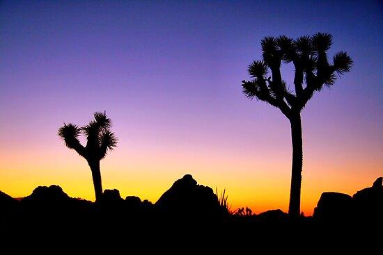Almost Night Mojave Desert by Jo Nijenhuis