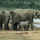 African Elephants by Karl Kruger