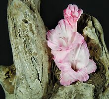 Driftwood Blossom by Maria Dryfhout