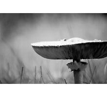 small visitors Photographic Print