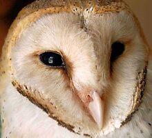 BARN OWL - Tyto alba by Magaret Meintjes
