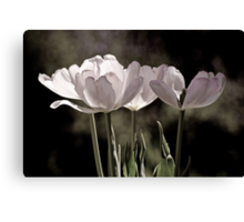 Love is a Tulip Canvas Print