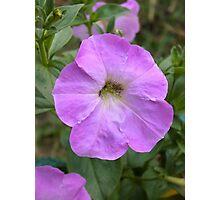 Petunia flower 10 Photographic Print