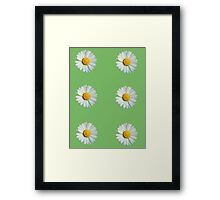 Six white daisies Framed Print