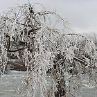 Frozen Branches by Carol Barona