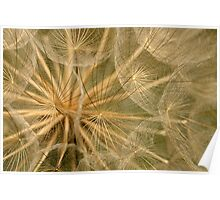 Delicate Seedhead Poster