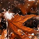 Dance of the Maple Fairies by Sue  Cullumber