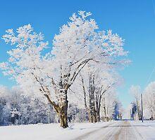 Frosted Landscape by JoCzech