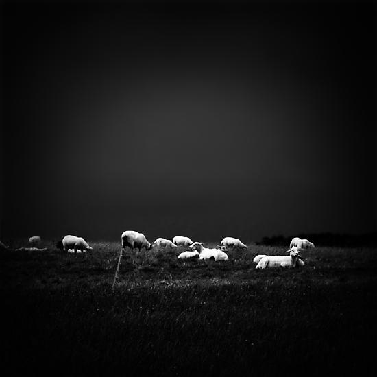 ... by Damienne Bingham