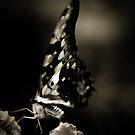 Butterfly II by Damienne Bingham