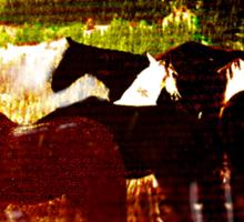 High Plains Horses T Sticker