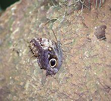 Butterfly by Kristin Nichole Hamm