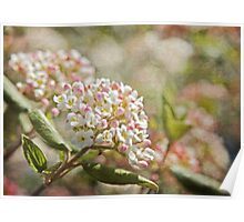 Vintage Inspired Pink and White Woodland Flowers with French Script Poster