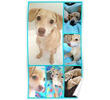 Puppy Sister's♡ Poster