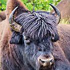 Bison Head by Yukondick