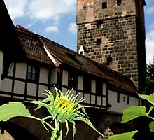 Nuremberg Castle by Zeanana