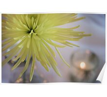 Yellow Dahlia Flower in Still Life Poster