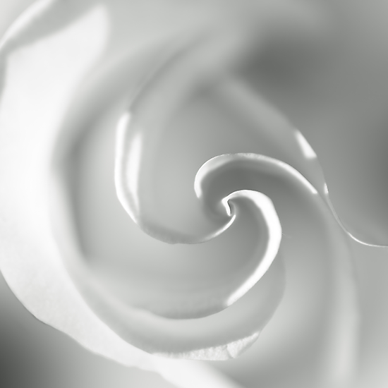 White II by Damienne Bingham
