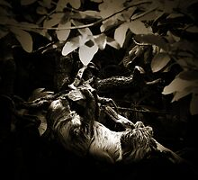 The Arboreal Life by Damienne Bingham