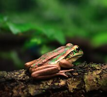 Green & Golden Bell Frog by Damienne Bingham
