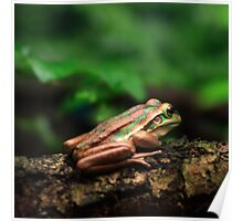 Green & Golden Bell Frog Poster