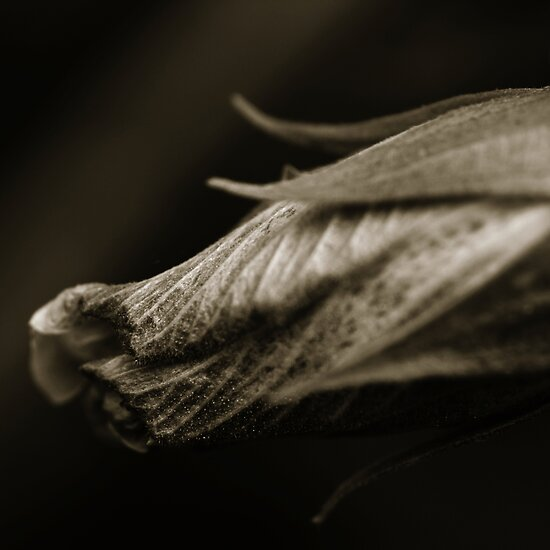 Life Is In The Details I by Damienne Bingham