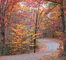 Tennessee Fall by Angela Housley