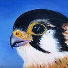 Peregrine Falcon by Denise Martin