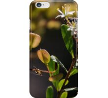 Flowers and seed heads white Microphylla clematis bush DCT 201501281468  iPhone Case/Skin
